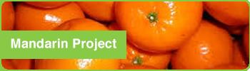 mandarinproject3
